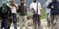 إصابة مواطن في اعتداء للمستوطنين خلال قطفه الزيتون جنوب غرب نابلس