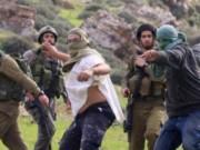مستوطنون يهاجمون مركبات المواطنين بين محافظتي قلقيلية ونابلس